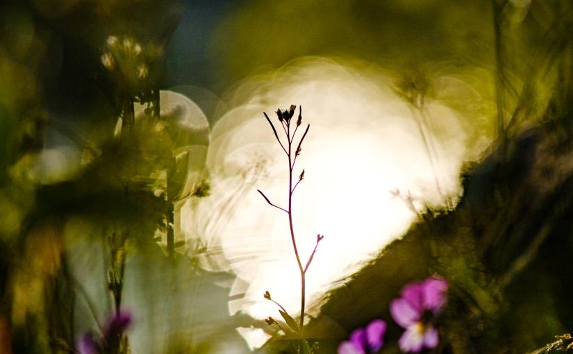 Sommaren kom, solen gick opp, kroppen sa' stopp, hej ohopp!
